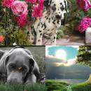 Lovely Dogs Animated Wallpaper freeware screenshot